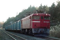 9281sarasina